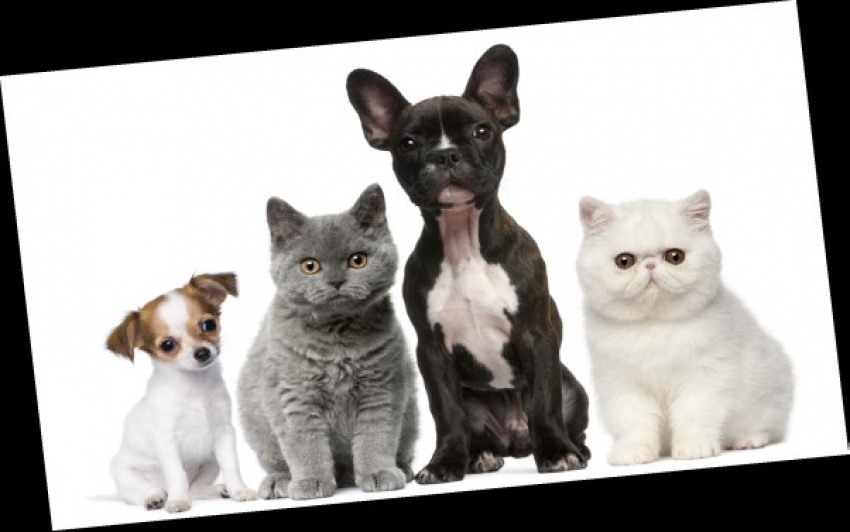 ONLINE PET SUPPLIES STORE!