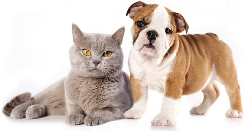 PET CARE PRODUCTS - WHOLESALE