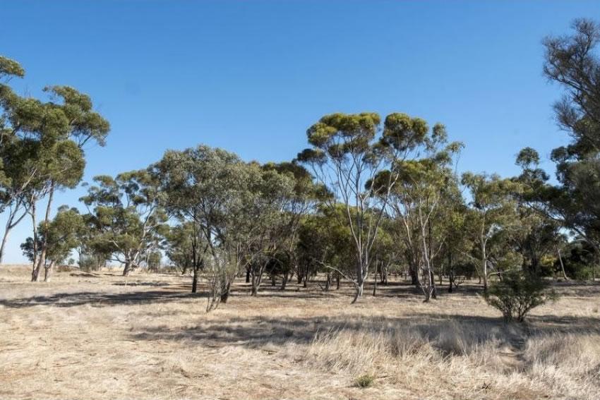 5.63 acres in Horsham