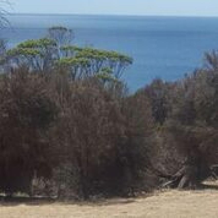 12 Dolphin Way, Penneshaw (Kangaroo Island) SA 5222.